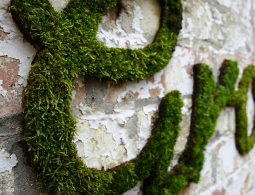 DIY – Moss graffiti – Decoración con musgo